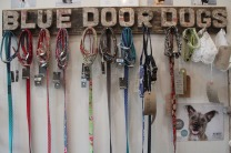 Blue Door Dogs - a range of products for your pooch