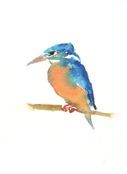 DiskinKingfisher1